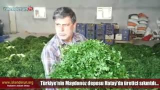 Maydanoz Tarlada 15, pazarda 50 kuruş!