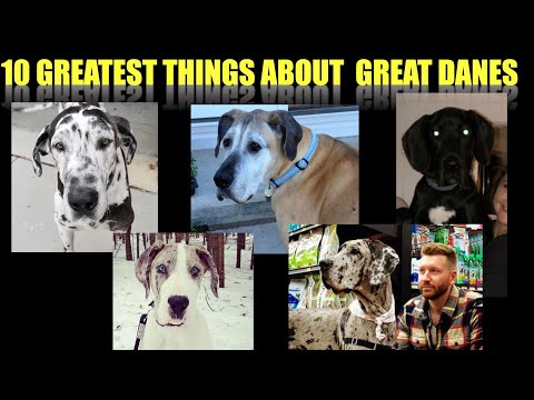 10 GREATEST THINGS ABOUT GREAT DANES