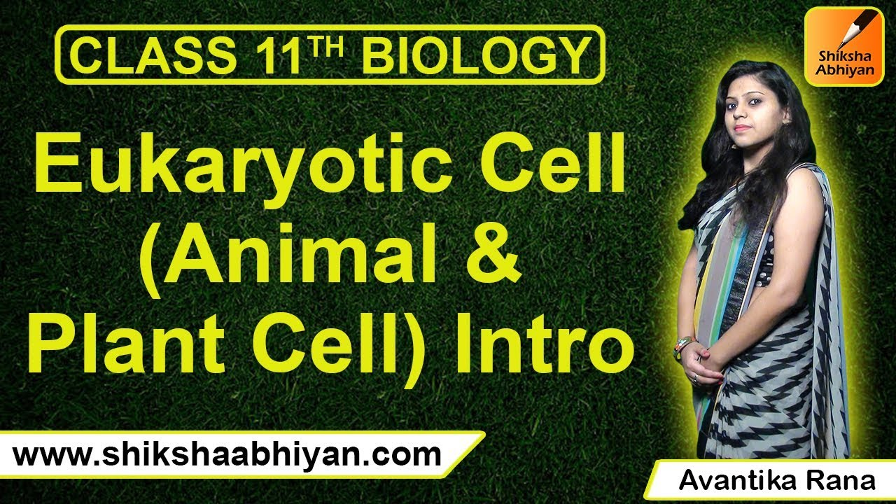 Eukaryotic Cell Animal- Plant Cell Intro-#CBSE Class 11 ...