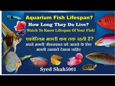 Aquarium Fish Lifespan | How Long Your Fish Live? - Lifespan Of Fish