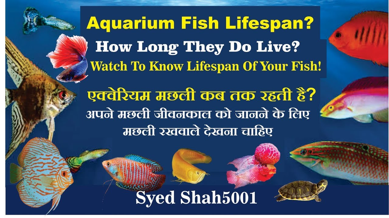 Lifespan Of Fishes Watch Before U Buy Watch To Know How Long Your