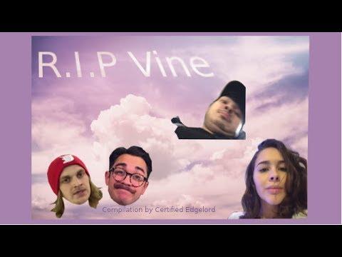 My Favorite Vines [R.I.P. Vine]