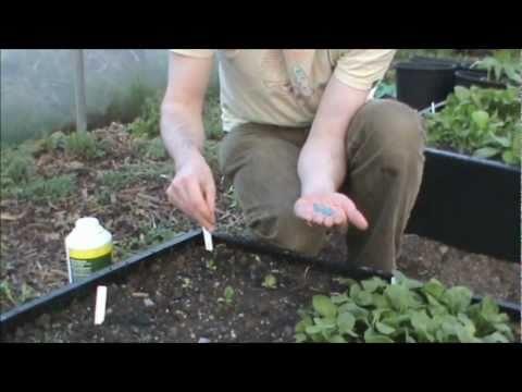 How to use slug pellets correctly