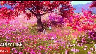 Kho Na Doon Main Armaan Malik Ft. Palak Muchhal Single Music Video...