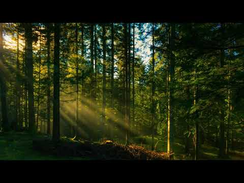 Звуки природы, шум леса, пение птиц / sounds of nature, birdsong, forest noise