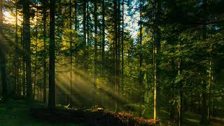 Звуки природы шум леса пение птиц Sounds Of Nature Birdsong Forest Noise