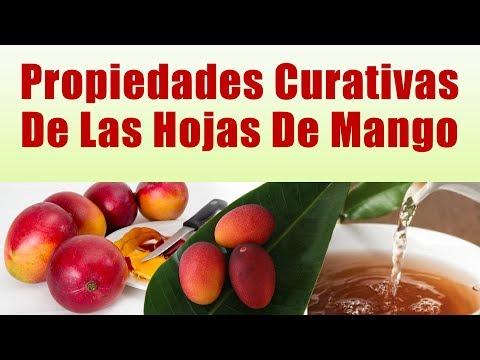 PARA QUE SIRVEN LAS HOJAS DE MANGO Propiedades Curativas De Las Hojas De Mango ¡IMPRESIONANTE!