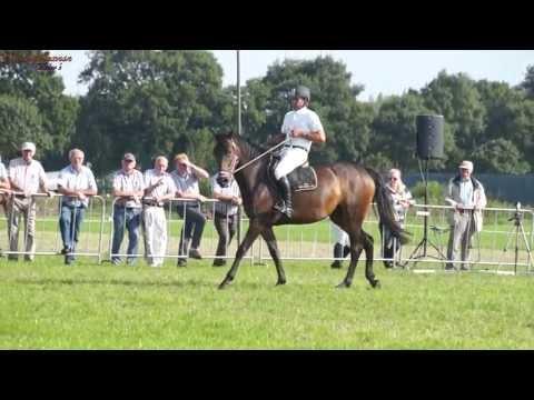 Guiness Book De Grootste En Kleinste Paard Ter Wereld Doovi