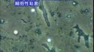 科学映像館 目で見る生命 細胞性粘菌2 The Life of Cellular Slime moid