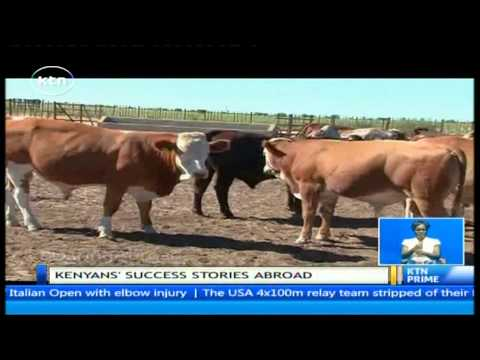 Daring Abroad: Willy Kathurima - Kenyan beef farmer in Botswana