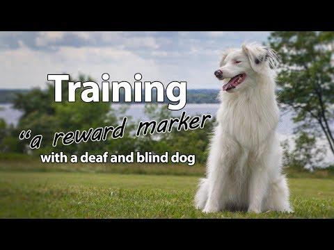 Training a Reward Marker With a Deaf/Blind Dog