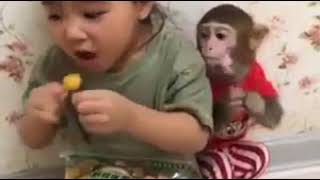 monkey children