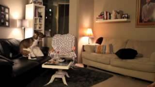 Что делает пёс когда никого нет дома?(Развлекательный портал http://lol54.ru/ - только отборные ништяки!, 2012-10-09T16:43:06.000Z)