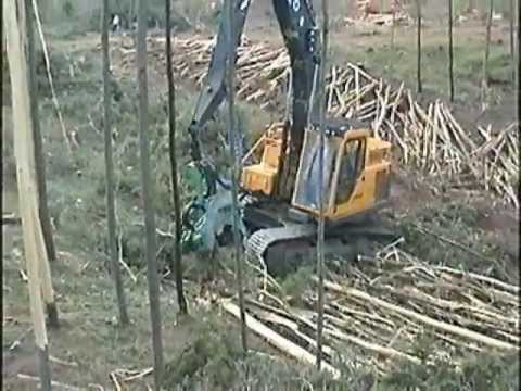 Logging and debarking Eucalyptus by a mechanical harvester