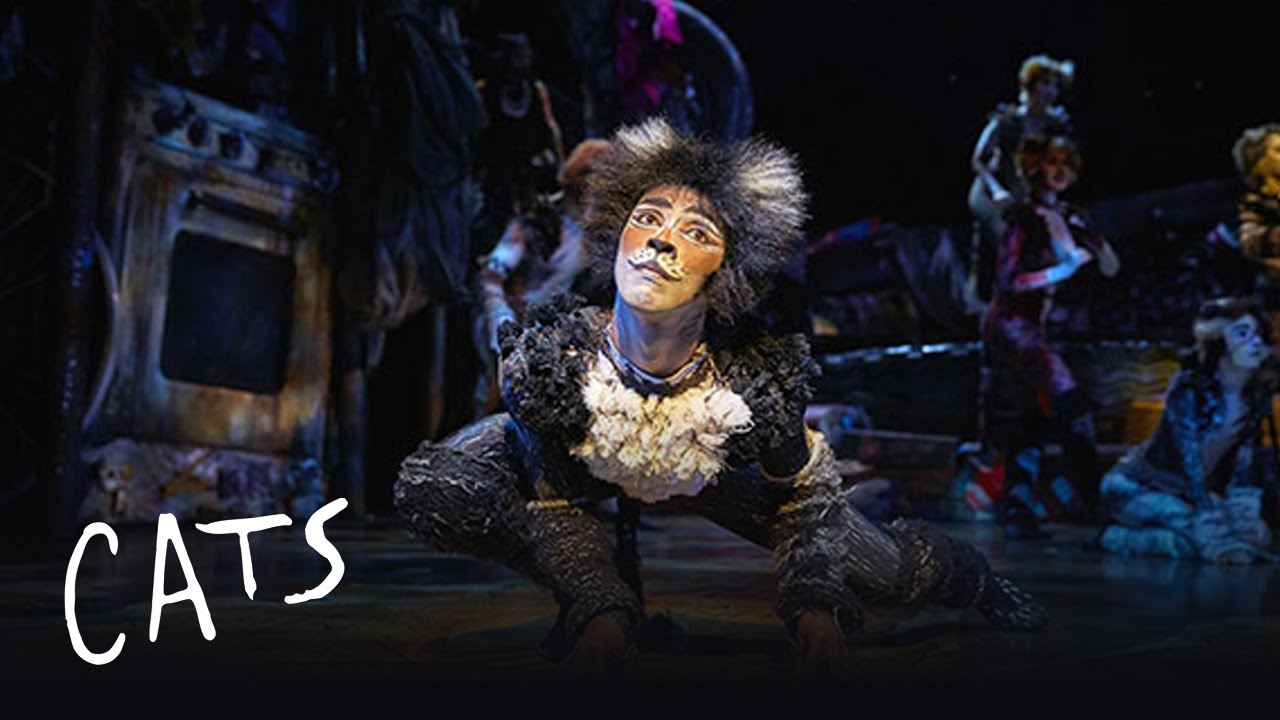 say bonjour to cats cats the musical