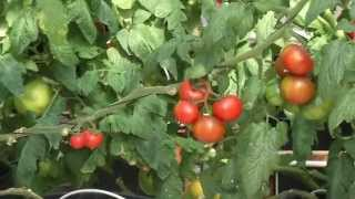New San Diego hydroponic farm