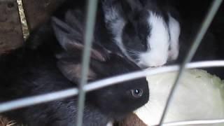 Funny Baby Bunny Rabbits Videos - Cute Rabbits