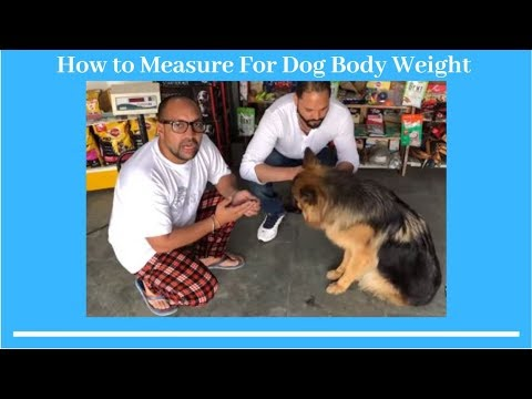 Pet Care - How to Measure For Dog Body Weight - Bhola Shola