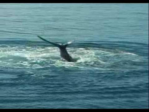 Balene - Whales