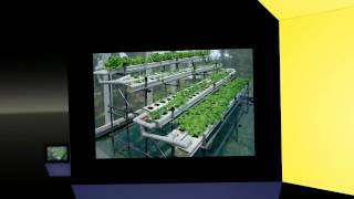 Hydroponics Halifax | Homemade Hydroponic Systems