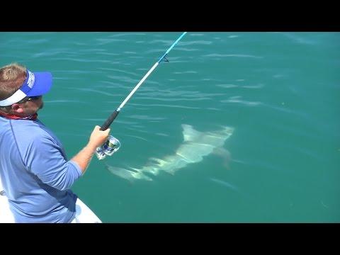 Tripletail and Bull Shark Fishing in Islamorada Florida