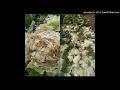 20170302-朋友種在清泉崗附近紅土的大白菜怎會變這樣(附圖)