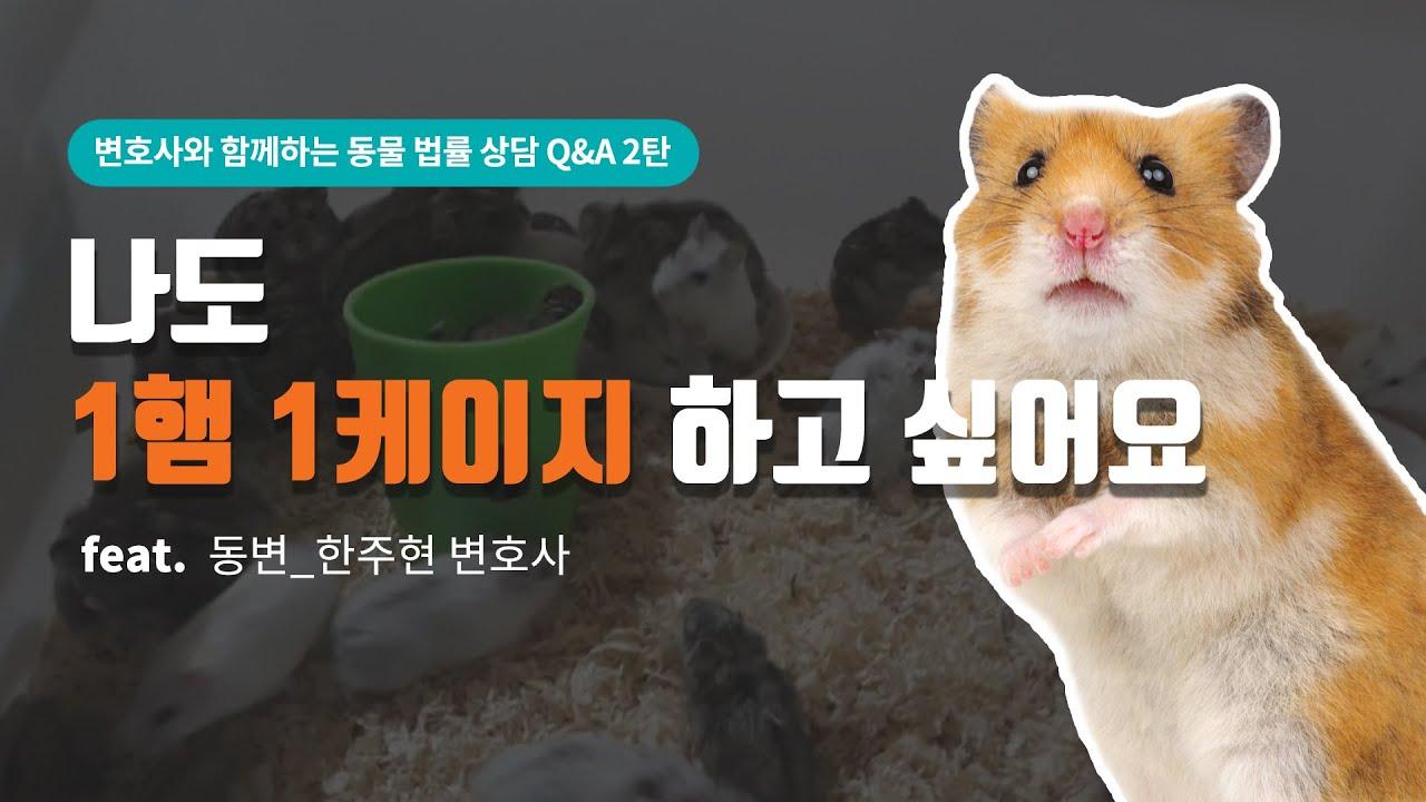[동물, 법을 묻다] 변호사와 함께하는 Q&A 2탄⁉