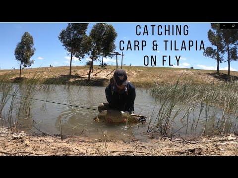 FLY FISHING FOR CARP & TILAPIA - CAPE TOWN SOUTH AFRICA