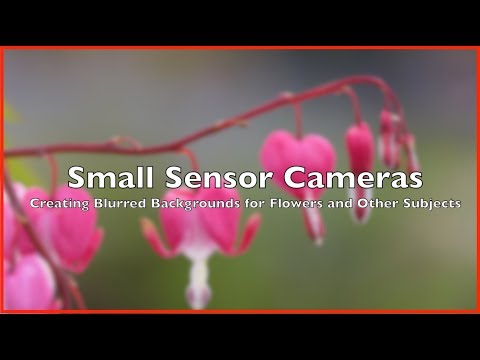 Creating a Nice Background Blur For Flower Studies with Small Sensor Cameras