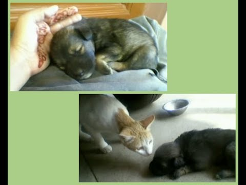 Cats and Dogs: My cute Pets