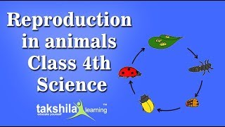 Reproduction in animals| CBSE Class4 Science Online/Offline Classes | CBSE Syllabus |NCERT Solution