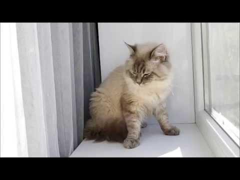 Вопрос: Зачем кошкам таурин?