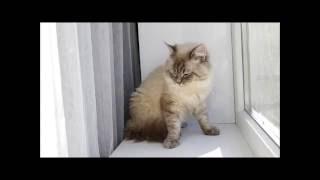 Витамины СеваВИТ с таурином для кошек.
