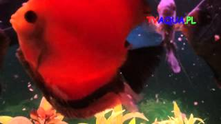 Interaktywne ryby-TVaqua.pl-.mov