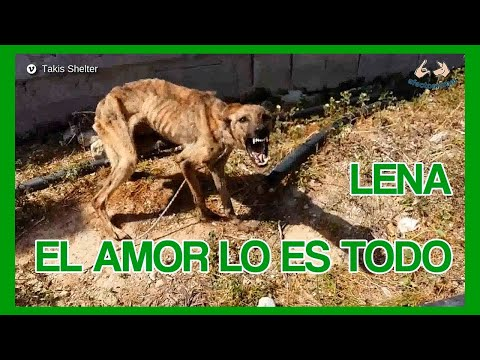 La historia de Lena, el Amor lo es todo 2019