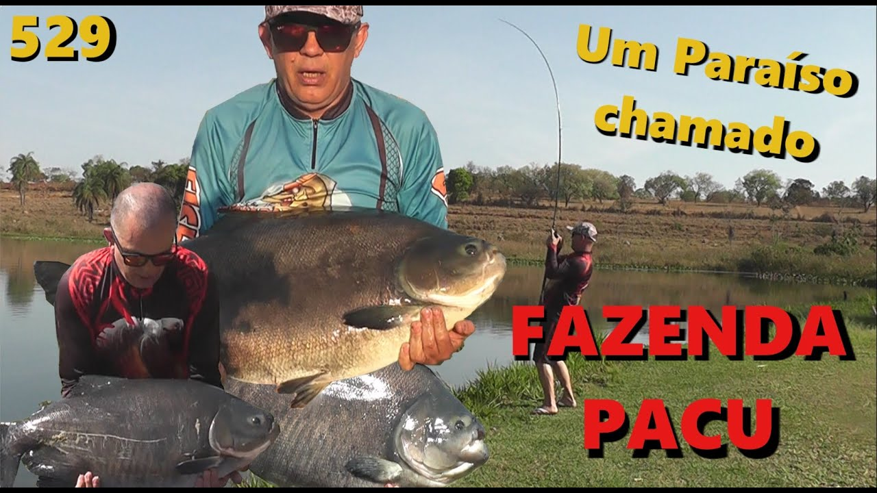 Fazenda Pacu - Grandes brigas com os Tambas - Fishingtur na TV 529