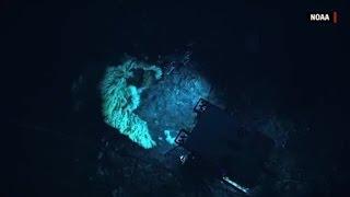 Minivan-sized sea creature discovered
