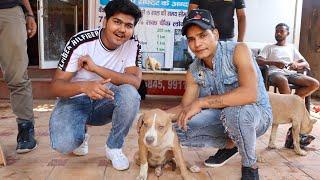 Cheapest Dog Market In In Delhi | [Wholesale/Retail] | Wholesale Price | Pitbull,American Bully,etc