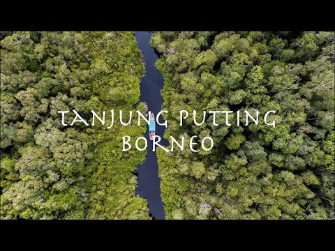 Wonderful Indonesia | Tanjung Puting National Park | Borneo