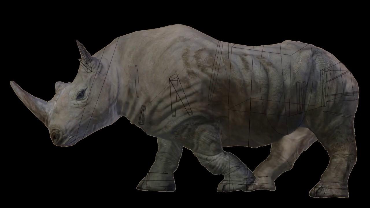 Southern White African Rhino