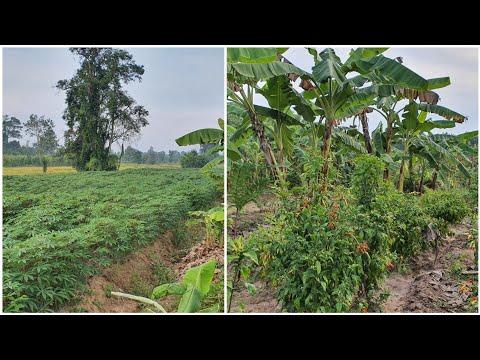 ข้อแตกต่างระหว่าง พืชเชิงเดี่ยวกับพืชผสมผสาน