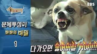 세상에 나쁜 개는 없다 - 문제투성이 뽀뽀의 비밀_#001