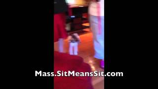 Massachusetts Dog Obedience Training - Betts Family Testimonial