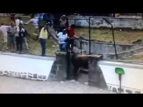 Kinh hoàng cảnh bò tót đuổi húc người ở lễ hội Tây Ban Nha