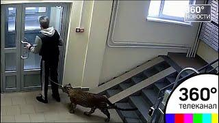 Соседи в шоке! Житель Нижнего Новгорода завёл это животное