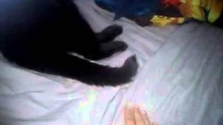 Mon chat a le sens du rythme