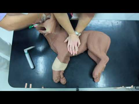 Cardiopulmonary Resuscitation (CPR) (Emergency Medicine In Small Animal Practice)