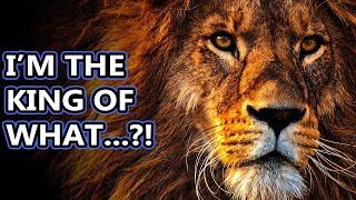 Lion facts: the king of the jungle? | Animal Fact Files