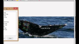 I3SGW: Gray Whale Demonstration