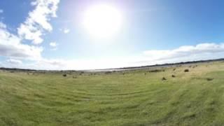 Mitten im Känguru-Rudel - Narawntapu Nationalpark Tasmanien - VR-Video 360° Video
